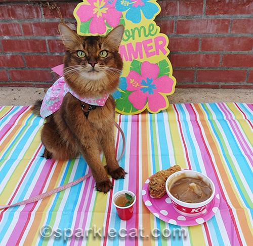 somali cat with KFC dinner and catnip mojito