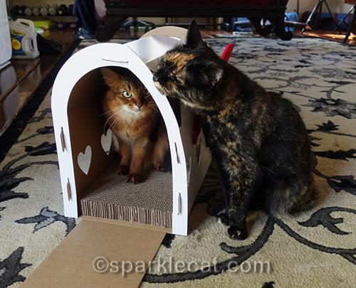 tortoiseshell cat rubs on mailbox scratcher