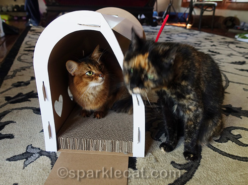 tortoiseshell cat rubs on mailbox scratcher and nearly removes front