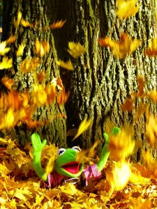 leaves-63305_640