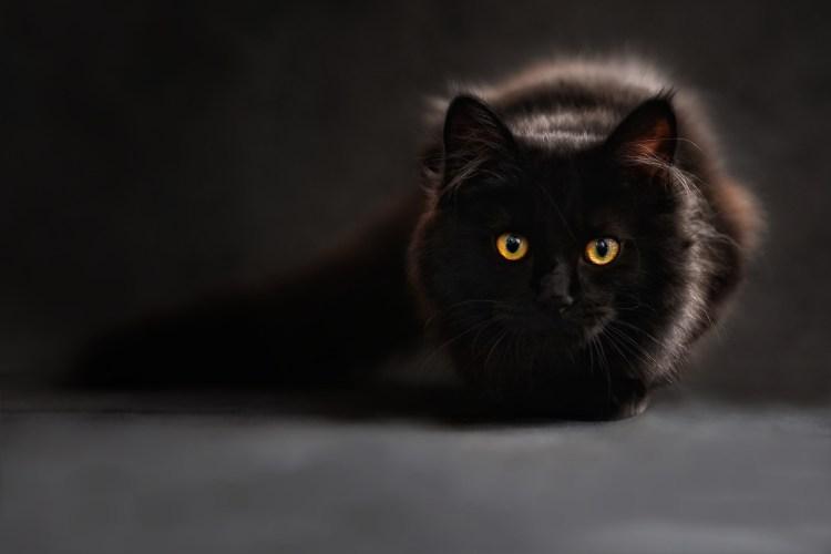 cat-694730_1920 Superstizione del gatto nero