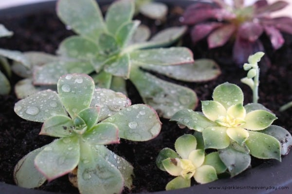 The tips to growing succulents inside!