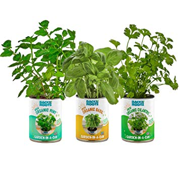 Back to the Roots Kitchen Herb Garden, Complete Herb Grow Kit, Grow Fresh Herbs Year Round, Variety Pack of Basil, Mint, and Cilantro, Top Gardening Gift, Holiday Gift, & Unique Gift