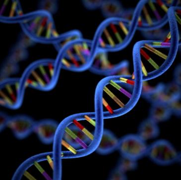 DNA upgrade to 12 strands