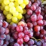 SAMEDI 16 NOVEMBRE 2019 à 16h : « L'encépagement du vignoble auvergnat, des origines à nos jours »
