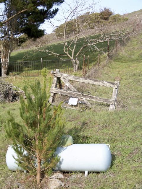 tree-tank1