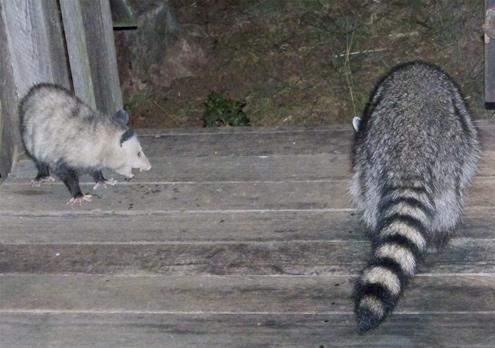 possum-snarl