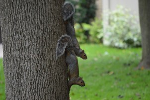 squirrel-832893_1280