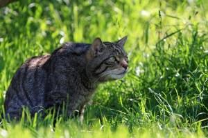 cat-220490_640