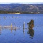 lago-di-lesina