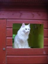 cattery-20061 - Copy