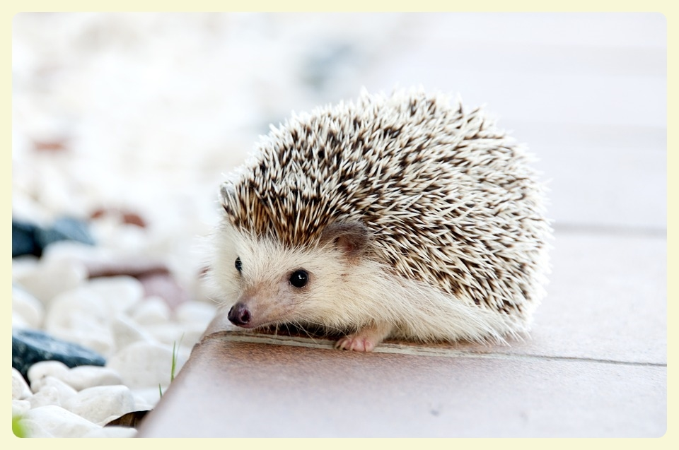 A Hedgehog in the Kitchen Parisian Cooking Blog for the Epicurious. Featured by Special Learning House. www.speciallearninghouse.com..jpg