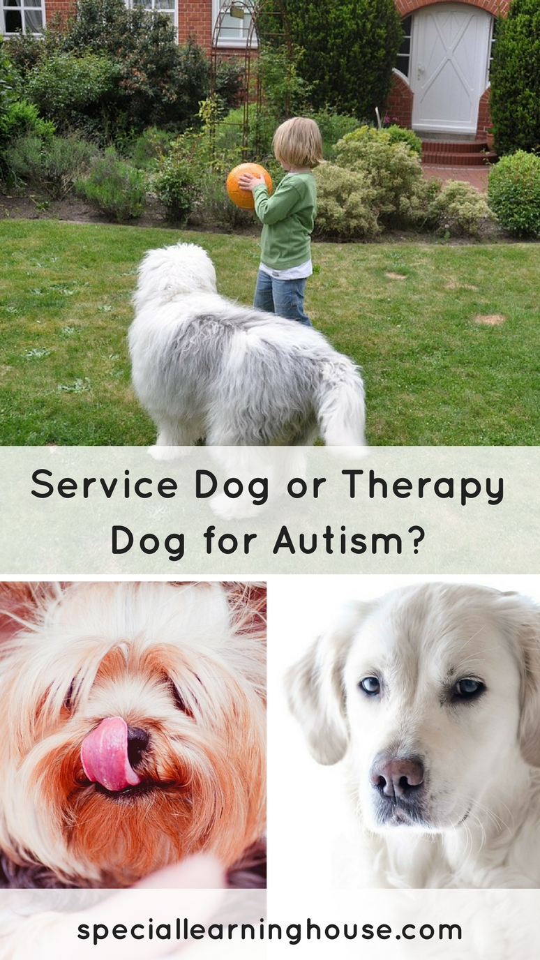 Should you choose a service dog, therapy dog or companion dog for your child with autism?   speciallearninghouse.com