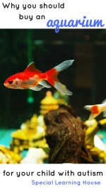 Why should you buy an aquarium for your child with autism? There are at least 7 benefits! | speciallearninghouse.com