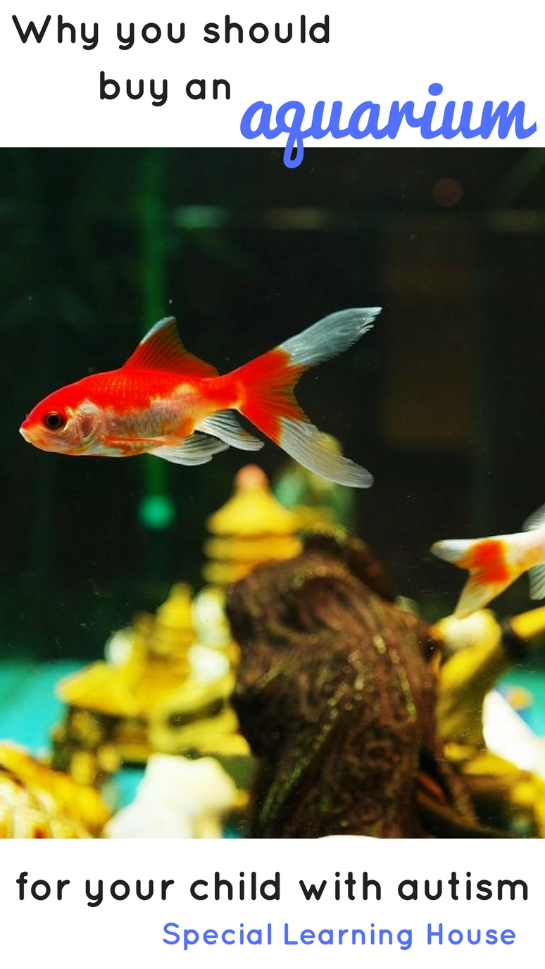 Why should you buy an aquarium for your child with autism? There are at least 7 benefits!   speciallearninghouse.com