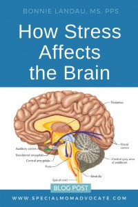 How Stress Affects the Brain and Hampers Learning