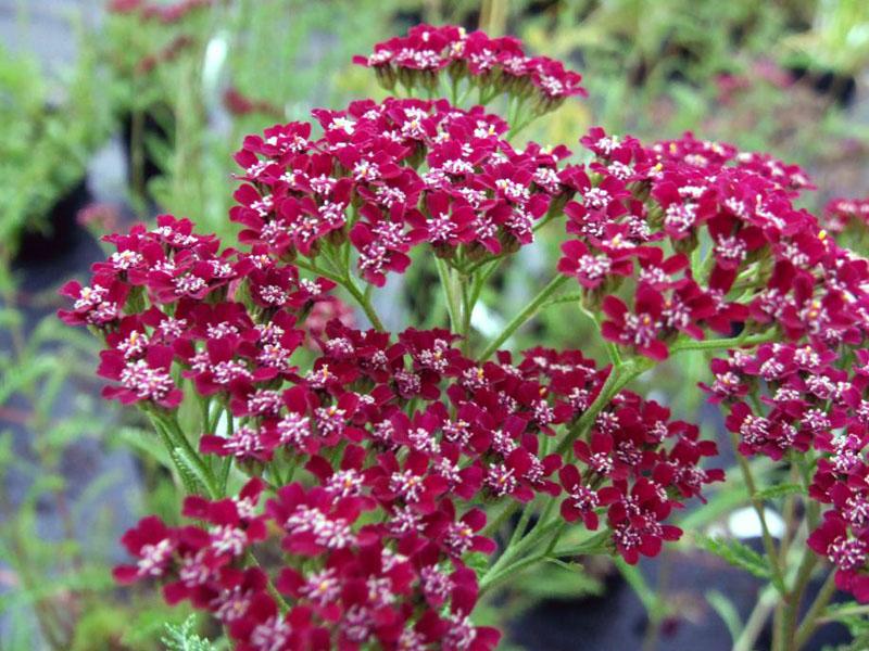 Flower Garden Accessories