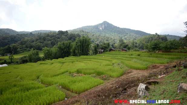 Visiter Doi Inthanon le parc naturel