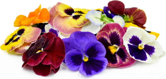 Pansy Flowers Information  Recipes and Facts Pansy Flowers