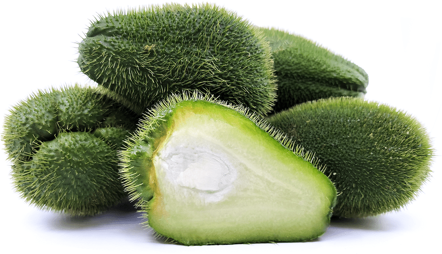 5381 - CHAYOTE SQUASH FRESH (click image to view)