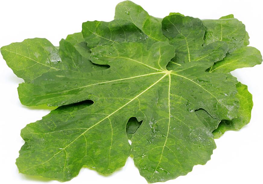 Image result for fig leaf