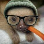 Profilbild von Sloth