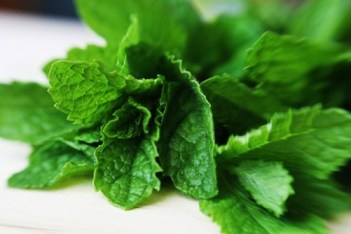 Using Peppermint Essential Oil