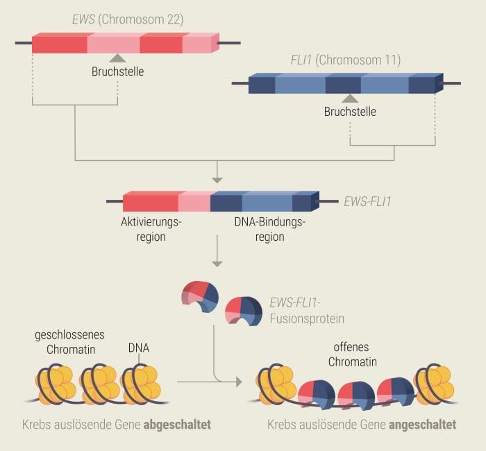 Schematische Darstellung zellulärer Prozesse beim Ewing-Sarkom