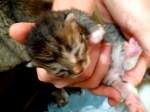 Kitten Five