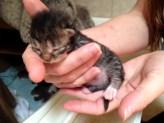 Kitten Four