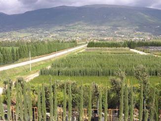 Umbraflor, inugurazione presso Vivaio di Spello