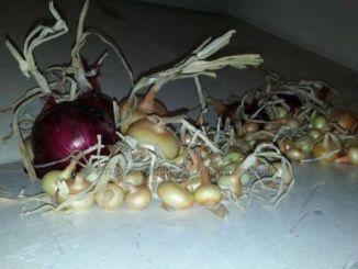 Cannara, tutto pronto per la 'festa della Cipolla, Winter Edition'