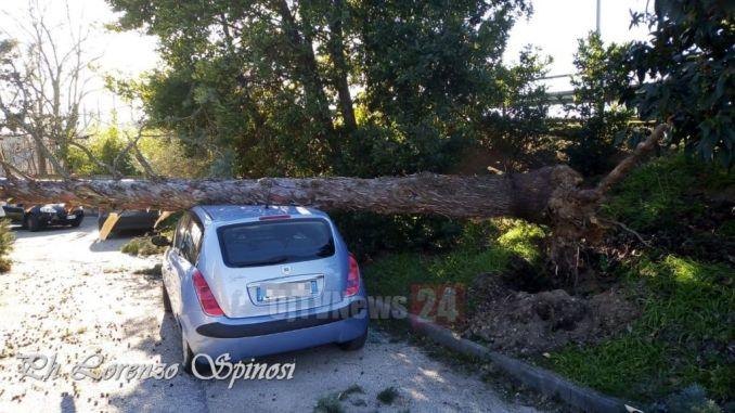 Forte vento, albero si schianta sopra auto a Spello e la distrugge