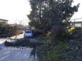 albero-su-auto (4)