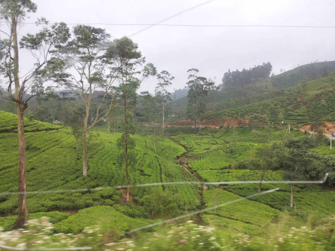Why get a window seat - famous train ride in Sri Lanka