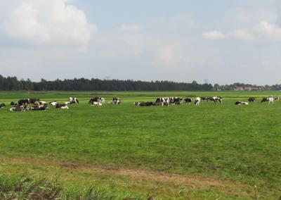 Being a Tourist in my Own Country: Traveling Through Holland