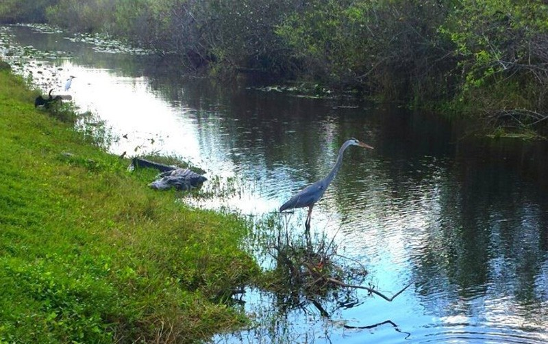 Everglades - Miami travel tips
