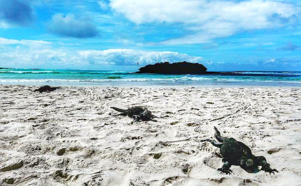 Galapagos Islands - an ultimate bucket list destination