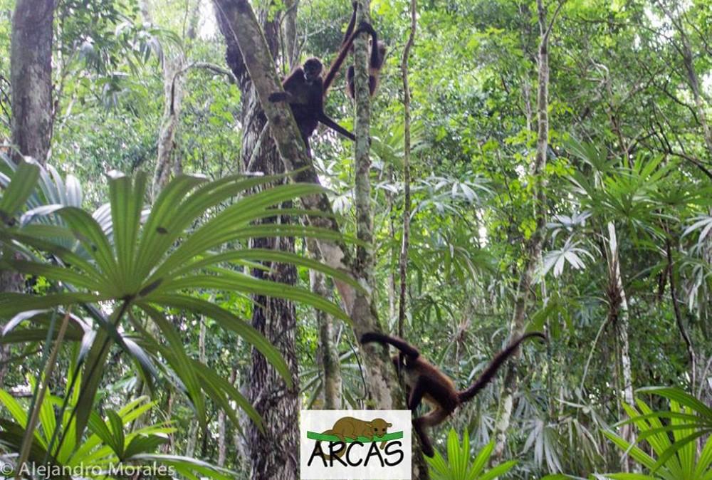 volunteer abroad: Guatemala wildlife protection