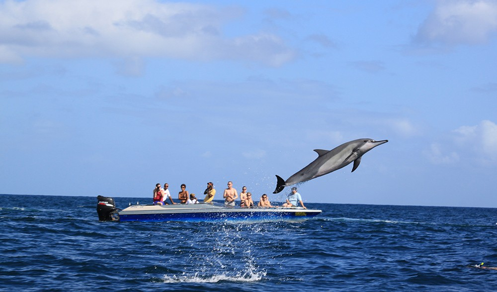 volunteer abroad: marine conservation in Mauritius