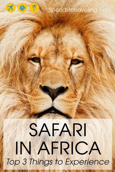 Top3 things to experience on a safari in Africa