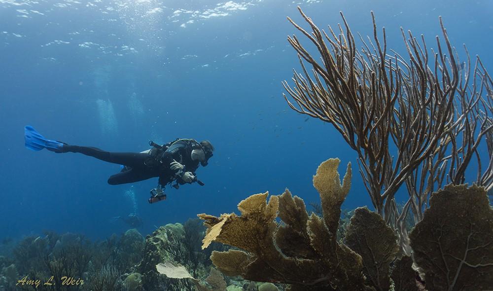 11 Of The Best Dive Sites in Bonaire – Caribbean