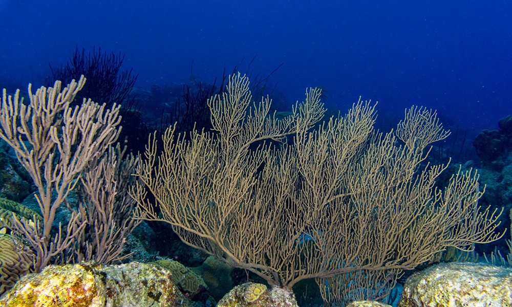 The Forest: one of the best dive sites in Bonaire