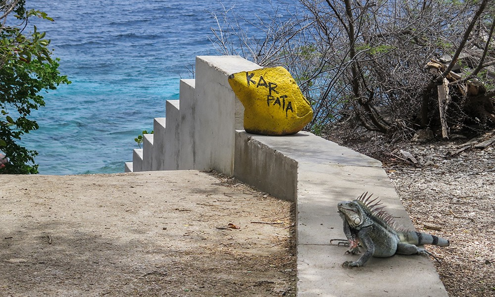 Karpata: one of the best dive sites in Bonaire
