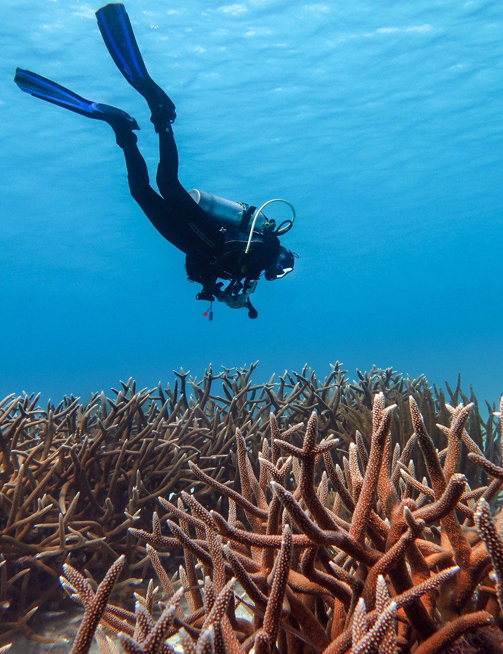 Margate Bay: one of the best dive sites in Bonaire