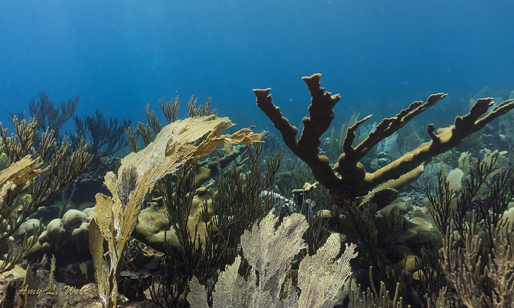 Willemstoren: one of the best dive sites in Bonaire