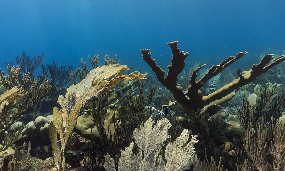 Willemstoren: one of the best dive sites in Bonaire