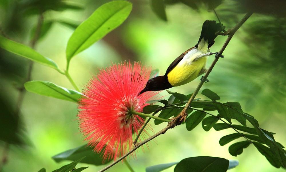 Highlights of Kerala: wildlife sanctuaries & national parks