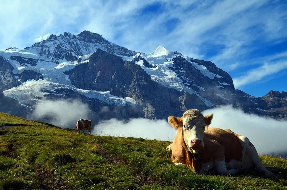 The Best Views in Switzerland – Where to Go If You Love the Outdoors & Breathtaking Views