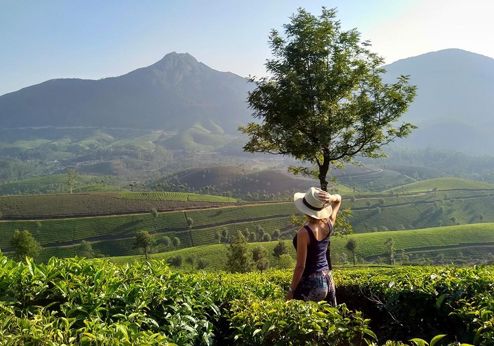 Highlights of Kerala: visiting a tea plantation